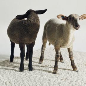 Tradition und Innovation zeichnen unsere Schafwollmanufaktur aus